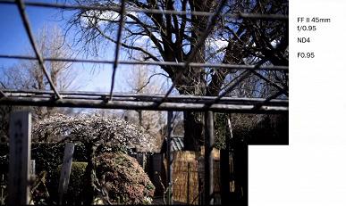 Галерея дня: снимки, сделанные объективами Laowa Argus с максимальной диафрагмой f/0,95