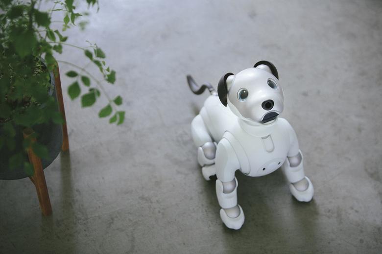 Новый робот-собака Sony Aibo выходит за пределы Японии