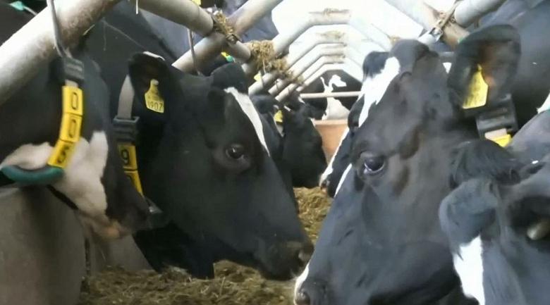 Английские коровы уже пользуются технологией 5G