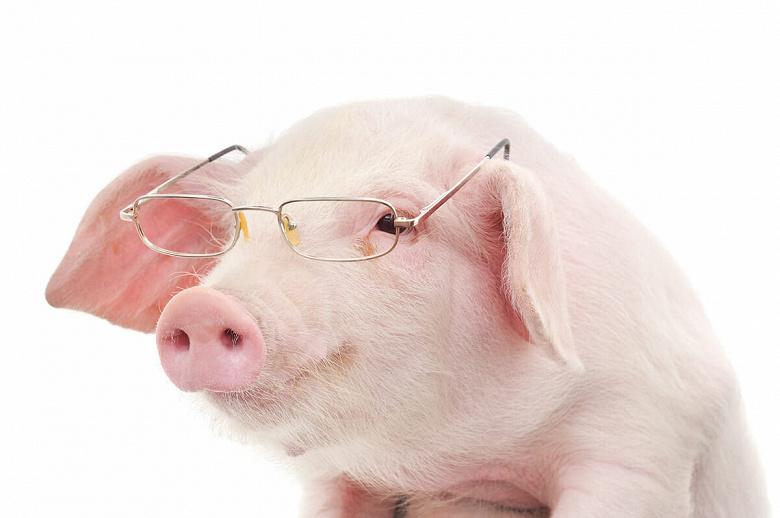 Huawei теперь разводит свиней, и это не шутка