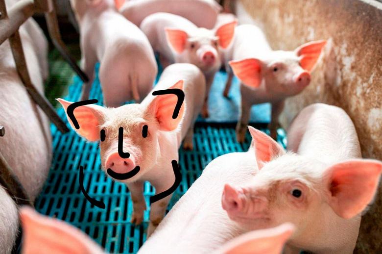 Huawei не разводит свиней. Компанию просто неправильно поняли