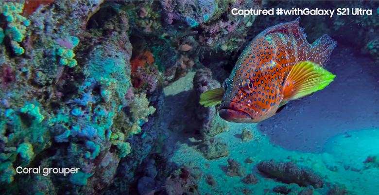 Первая подводная экспедиция, запечатлённая на смартфон. National Geographic использовала Samsung Galaxy S21 Ultra