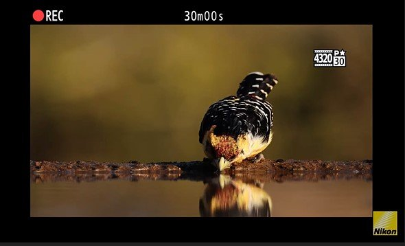 Опубликовано второе видео Nikon о камере Z9