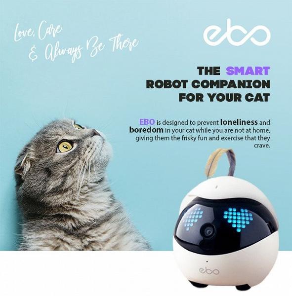 Ebo — робот-компаньон для кошек