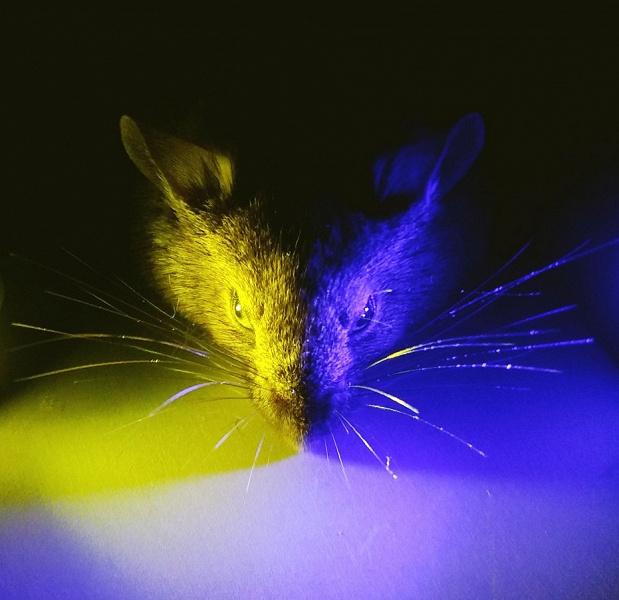 Ученые ошибались. Синий спектр света оказался полезным