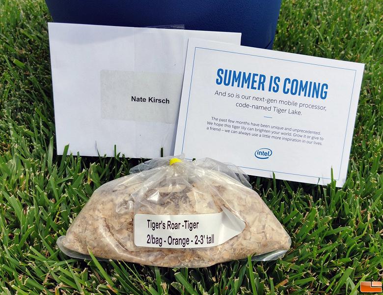 Intel отправила журналистам горшки и лилии. Это приглашение на анонс процессоров Tiger Lake