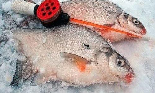 Ловля леща — одна из самых волнительных зимних рыбалок Лучшая прикормка для