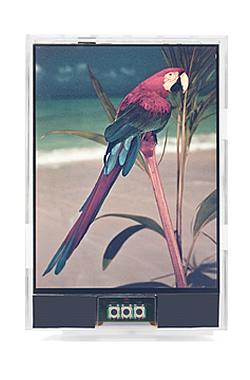 Japan Display собирается показать цветной жидкокристаллический дисплей, «похожий на бумагу»