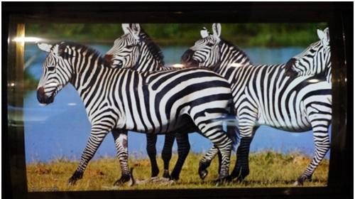 Специалисты SEL создали прототип гибкого дисплея OLED размером 13,5 дюйма и разрешением 3840 x 1260 пикселей