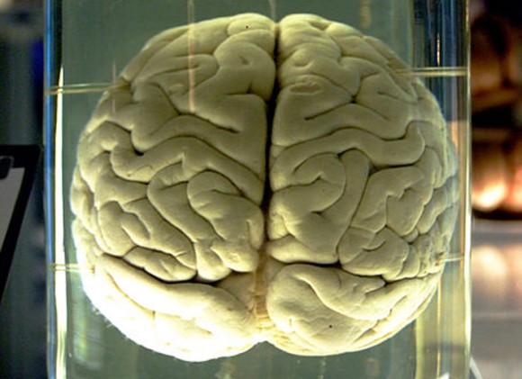 Qualcomm neural processing units