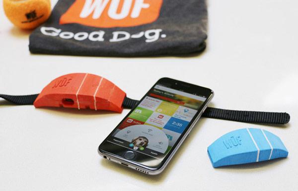 Ошейник WÜF предложен в трех вариантах размера и двух вариантах цвета