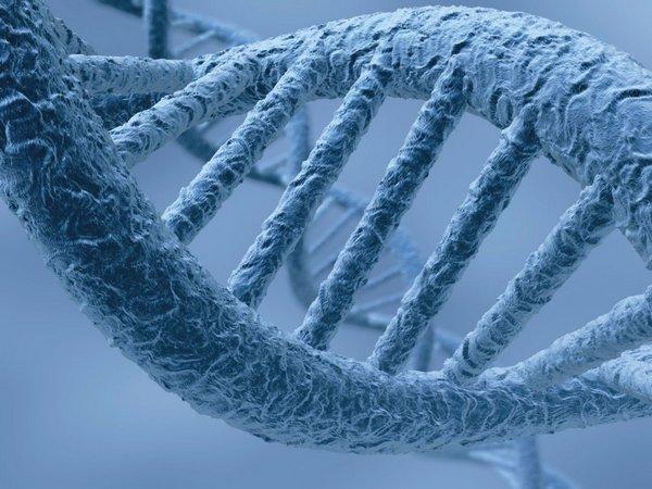 Sony геном P5 Inc