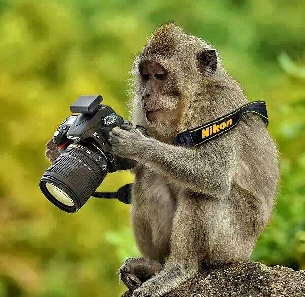 Квартальный доход Nikon за год уменьшился с 231,5 до 197,5 млрд иен