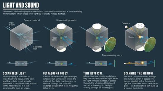 Ученые надеются заменить рентген видимым светом при сканировании живых тканей