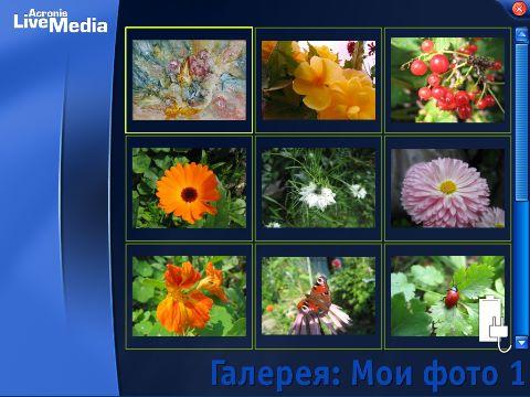 Любимые цветы жены...